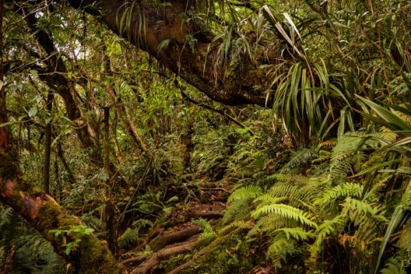 reunion-kalandnyaralas-tura-suru-dzsungel-jungle-erdoB12333B0-681A-3DD3-E7B9-73F7A76BB60D.jpg