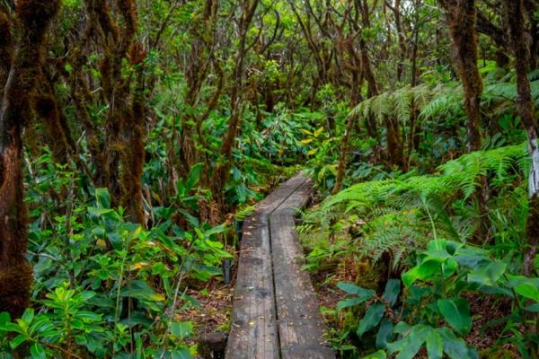 hawaii-kauai-kalandtura-utazas-223C604234-57F1-F39D-A3C0-ED518E3845F4.jpg