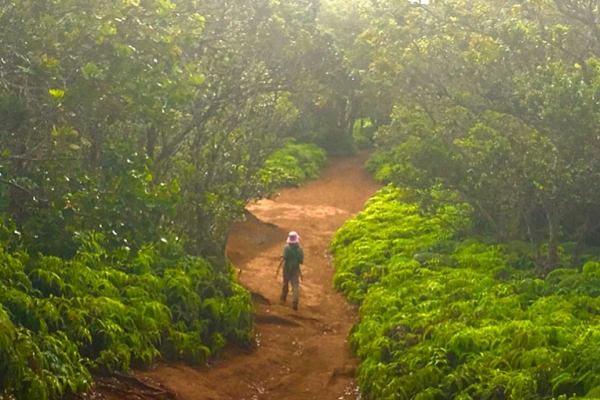 hawaii-kauai-kalandtura-utazas-493C4D47BD-33FA-1A82-6C08-8280842002F0.jpg