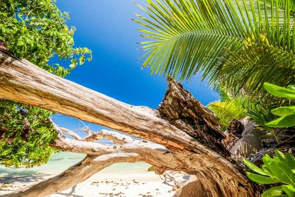 seychelles-vitorlas-tura-vitorlazas-55A7B028EE-E125-1855-1B1E-5C6146BE3D07.jpg