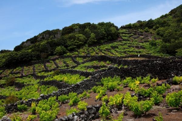 kalandnyaralas-tura-azori-szigetek-2-faial-flores-pico-2243571840-62AA-AE0E-8966-3675073166C9.jpg