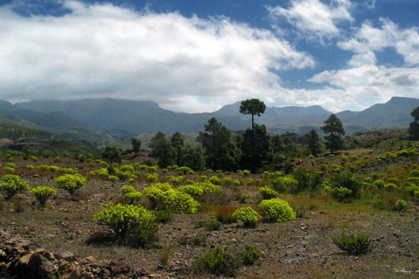 kanari-szigetek-teide-tura-026-michael-kirste-photography0B0DE65A-1A22-1962-D74F-1C515FFC93A0.jpg