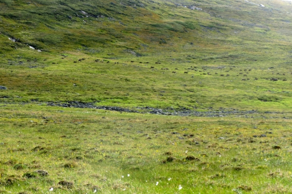 trekking-sved-lappfoldon-kebnekaise-2104m-megmaszasa-kungsleden-30245321C-1FE7-3B87-D543-18D9A9616D62.jpg
