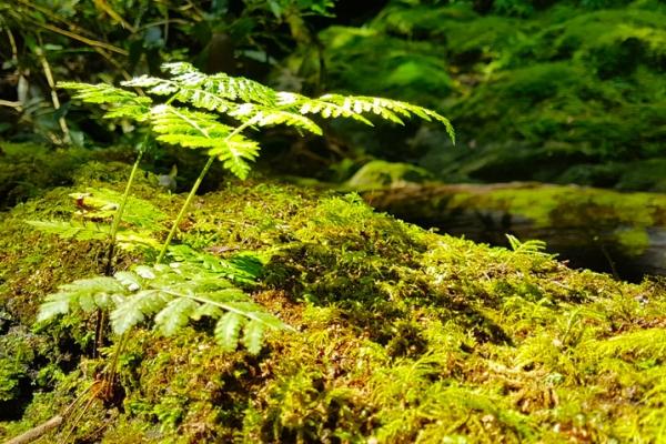 madeira-kalandtura-nyaralas-levada-canyining-tura-202AFF3D83B-D974-169A-E4B7-408D564A4A1A.jpg