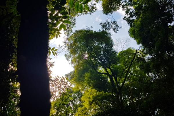 madeira-kalandtura-nyaralas-levada-canyining-tura-207A4407D33-BE60-E1B0-ABB8-7066A52716B5.jpg