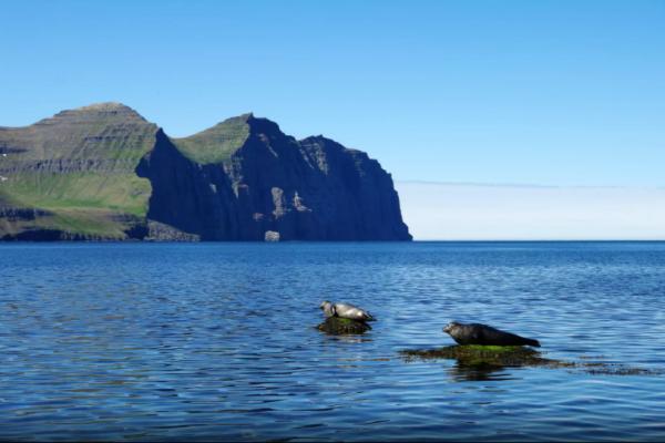 izland-hornstrandir-trekking-kaland-tura-nomad-reykjafordur2BC957F74-BE3D-9BBF-3563-F2CAEB0B1730.png