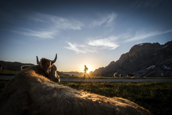 svajc-trekking-tura-trail-tehen-alpes-eiger-monch-jungfrau15097191-06A3-D653-27A4-066FD1FEA2A1.jpg